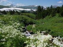 Cerca de la montaña de Korolevsky Belok fotografía de archivo