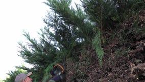 Cerca de la vida del corte del trabajo que cultiva un huerto del ciprés Leylandia metrajes
