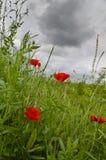 Cerca de las flores hermosas Fotografía de archivo libre de regalías