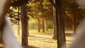 Cerca de madeira com árvores Fotografia de Stock Royalty Free