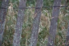 Cerca de madeira com musgo Fotografia de Stock Royalty Free