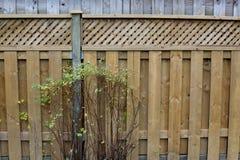 Cerca de madeira da placa vazia do quintal com arbusto verde Foto de Stock