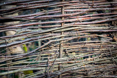 Cerca de madeira do Wattle Fotos de Stock