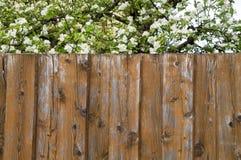 Cerca de madeira e árvore de florescência Fotos de Stock