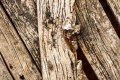 Cerca de madeira envelhecida Fotografia de Stock Royalty Free