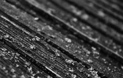 Cerca de madeira Roof imagem de stock