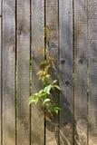 Cerca de madeira velha Fotografia de Stock Royalty Free