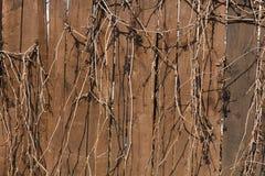Cerca de madeira velha Imagens de Stock