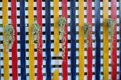Cerca de madera colorida con los árboles de la ejecución Fotografía de archivo libre de regalías
