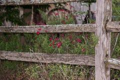 Cerca de madera con el arbusto del sabio del otoño Imagen de archivo libre de regalías