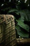Cerca de madera con las hojas verdes imágenes de archivo libres de regalías