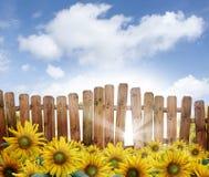 Cerca de madera con los girasoles Foto de archivo libre de regalías
