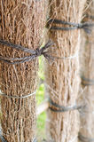Cerca de madera de bambú imagen de archivo libre de regalías