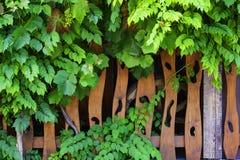 Cerca de madera en un césped verde Fotos de archivo libres de regalías