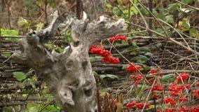 Cerca de madera seca y Bush almacen de metraje de vídeo