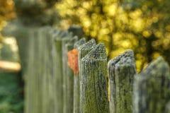 Cerca de madera y hoja amarilla del otoño Imagenes de archivo