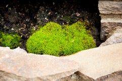 Cerca de pedra atrás que cresce a planta verde-clara no parque ? ver?o fora imagem de stock royalty free
