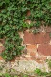 Cerca de pedra com trepadeira Imagem de Stock Royalty Free