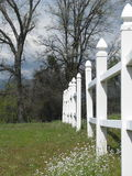 Cerca de piquete branca no prado de florescência Imagens de Stock