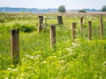 Cerca de posts de madera y del alambre de púas rodeados por el vegetat enorme Fotos de archivo