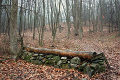 Cerca de salto do corta-mato Fotografia de Stock