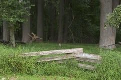 Cerca de trilho derramada nas madeiras Imagens de Stock