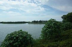 Cerca de un lago Imagenes de archivo