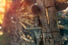 Cerca de vime feita dos galhos de madeira nos raios do sol Fotografia de Stock