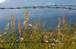 Cerca del alambre de púas en país Imagen de archivo libre de regalías
