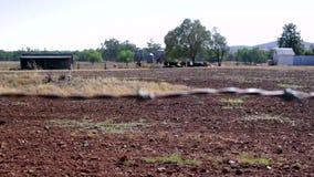 Cerca del alambre de púas en un foco del tirón del prado de la vaca almacen de metraje de vídeo