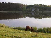 Cerca del lago un caballo pasta Foto de archivo