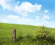 Cerca del país con las flores con el cielo azul Imagen de archivo