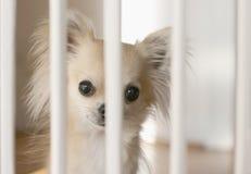 Cerca del perro dentro Imagen de archivo libre de regalías