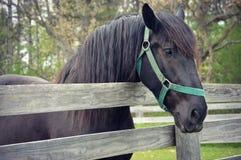 Cerca do cavalo imagens de stock