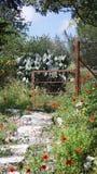 Cerca do marrom da vegeta??o das hortali?as das papoilas das flores da flora das plantas em Chipre foto de stock