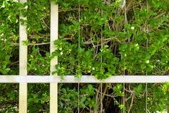 Cerca do metal e folha verde Imagens de Stock