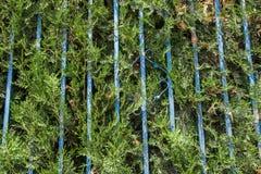 Cerca dos arbustos Foto de Stock Royalty Free
