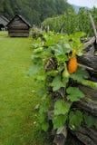 Cerca e celeiro de trilho na exploração agrícola Fotografia de Stock Royalty Free
