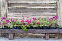 Cerca e flor de bambu Foto de Stock Royalty Free