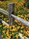 Cerca e flores amarelas imagem de stock royalty free