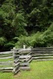 Cerca e pinhos de trilho rachado Fotografia de Stock