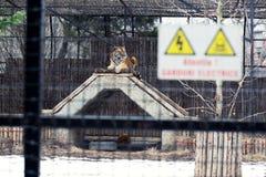 Cerca electrificada parque zoológico de la jaula Imagenes de archivo