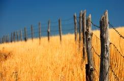 Cerca en un campo de maíz Imagen de archivo