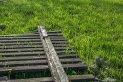 Cerca en una hierba Imagenes de archivo