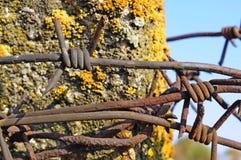 Cerca enredada del alambre de púas Fotografía de archivo