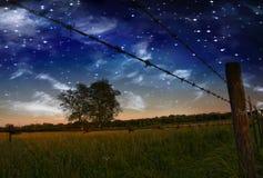 Cerca estrelado e campo da noite Fotos de Stock