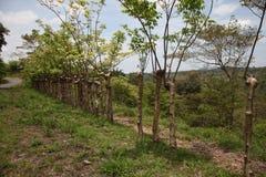 cerca feita de árvores vivas foto de stock