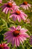 Cerca Gardening Fotografía de archivo libre de regalías