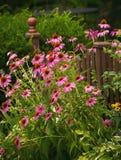Cerca Gardening Imagen de archivo