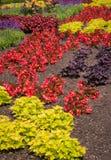 Cerca Gardening Fotografía de archivo